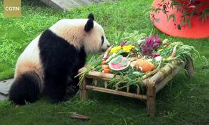 Tiệc sinh nhật đông khách của gấu trúc
