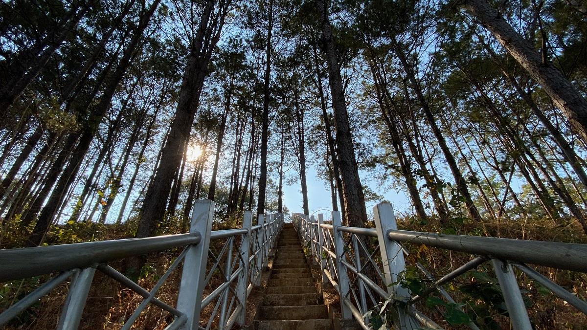Đến Biển Hồ, chàng trai yêu du lịch cũng dành thời gian lang thang trên đồi thông để ghi lại những bức ảnh đẹp. Nhờ có đất đỏ bazan màu mỡ và khí hậu ôn hòa nên những rừng thông ở đây xanh tốt, có rêu phong phủ đầy tạo nên khung như những rừng bạch dương ở Nga.