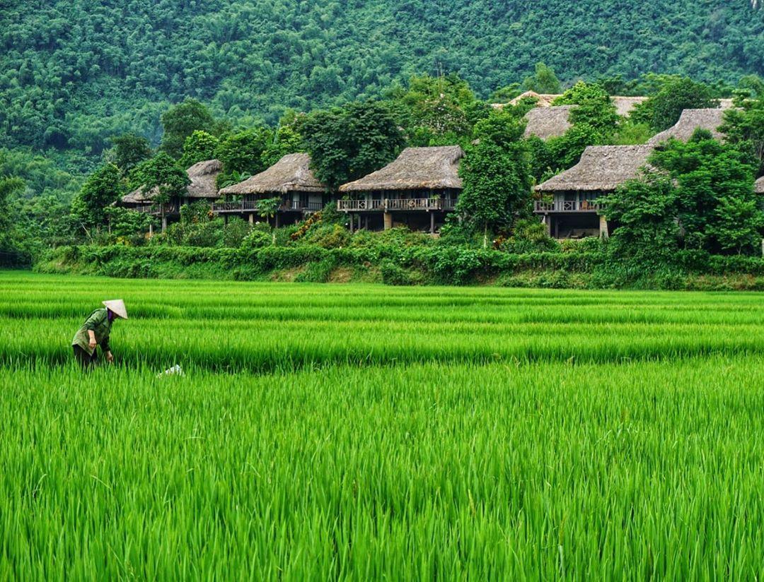 Khung đồng lúa xanh mướt phía trước khu resort. Ảnh: Fanpage Mai Châu Ecolodge.