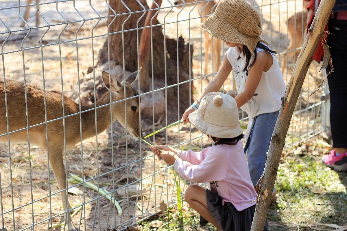 Với các du khách nhí, Minera Hot Spring Binh Chau đã thiết kế những khu vực riêng dành cho những khám phá về nước cùng rừng cây với những con thú đáng yêu và các hoạt động tăng cường thể chất toàn diện. Giữa một khung cảnh thiên nhiên, những đứa trẻ sẽ hạnh phúc và khỏe mạnh hơn bởi hưởng trọn năng lượng đến từ nước và tự nhiên.