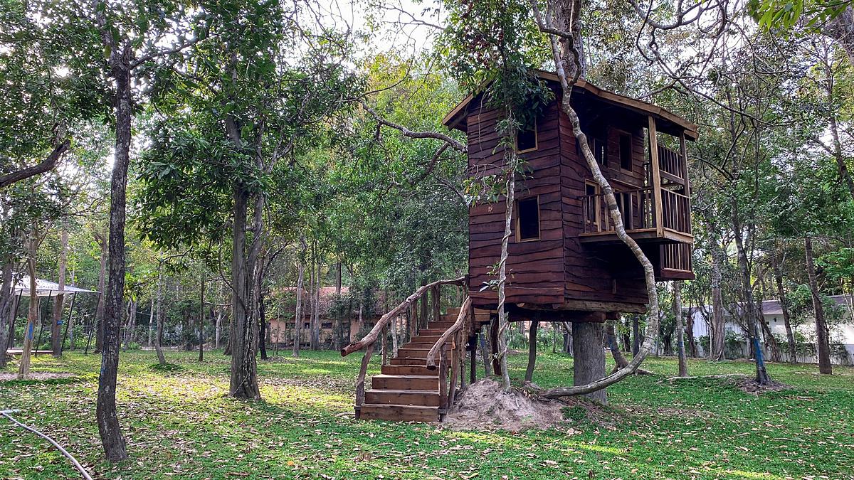 Du khách có thể ghé thăm khu rừng với nhiều nhà nghỉ trên cây để tận hưởng cảm giác nghỉ ngơi giữa rừng xanh.