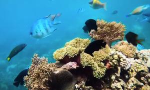 Dưới đáy biển Hòn Mun