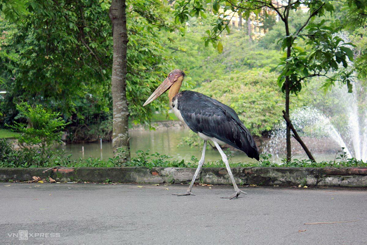 Vắng du khách, một số loài vật tự do đi lại trên đường trong Thảo Cầm Viên. Ảnh: Tâm Linh/VnExpress