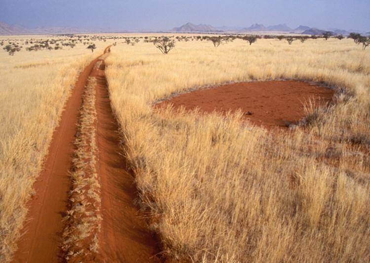 Bí ẩn về những Vòng tròn thần tiên trên đồng cỏ khô - 4