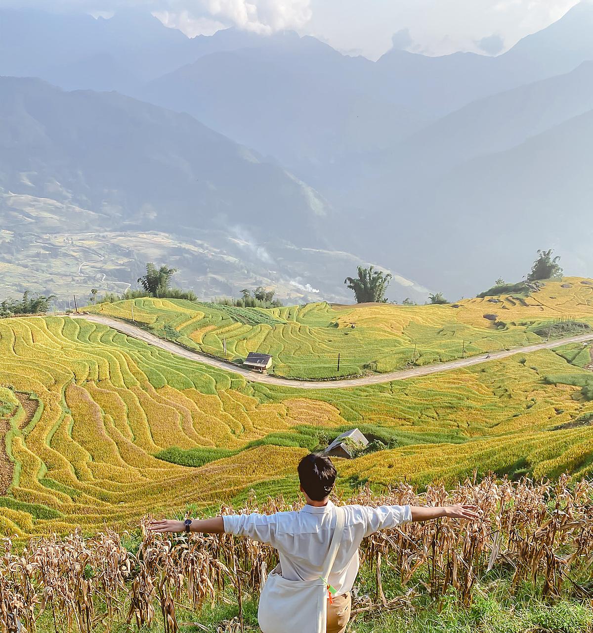 Những thảm vàng lúa chín trải rộng khắp các cung đường níu chân du khách. Lúa ở Y Tý hiện đã gặt khá nhiều và chỉ còn rải rác tới cuối tuần này là qua thời điểm đẹp nhất.