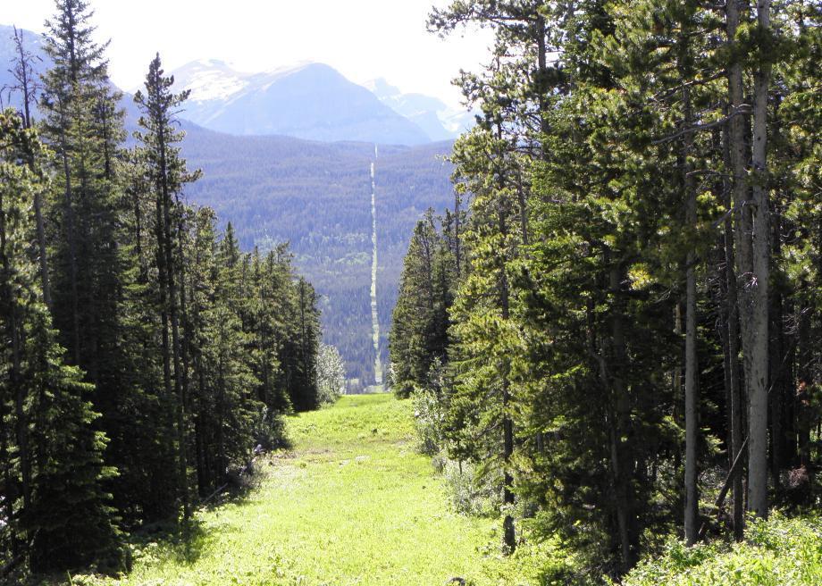 Đường biên giới hữu hình chạy xuyên qua rừng núi. Ảnh: Carolyn Cuskey/Creative Commons