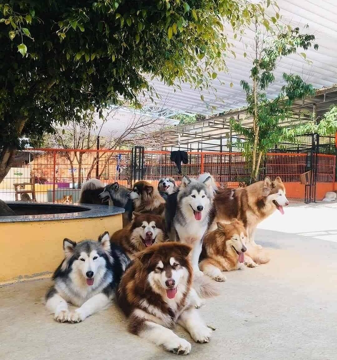 Ảnh: Nông trại cún Puppy Farm