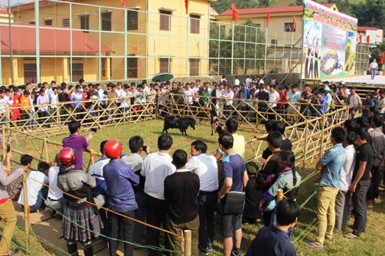 Hội thi chọi Dê hàng năm thu hút nhiều du khách. Ảnh: Trang thông tin điện tử UBND huyện Mù Căng Chải