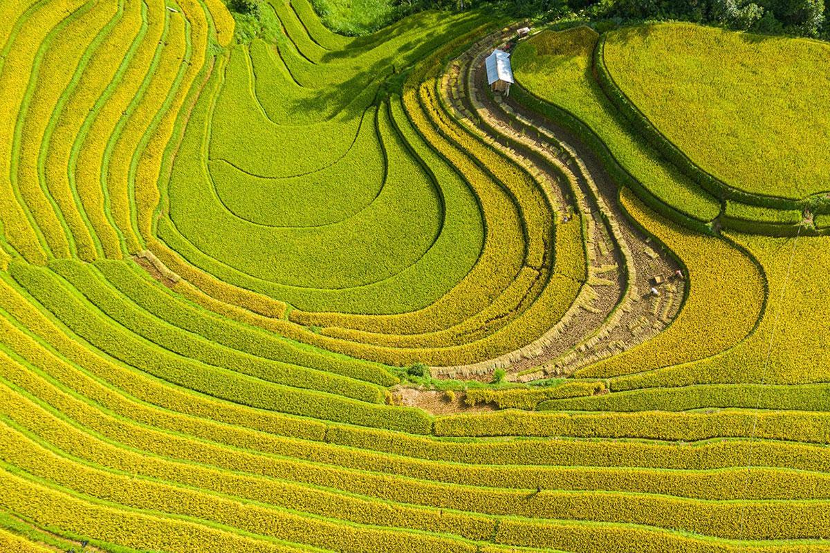 Ruộng bậc thang ở xã Mồ Dề, huyện Mù Cang Chải. Ảnh: Nguyễn Tấn Tuấn