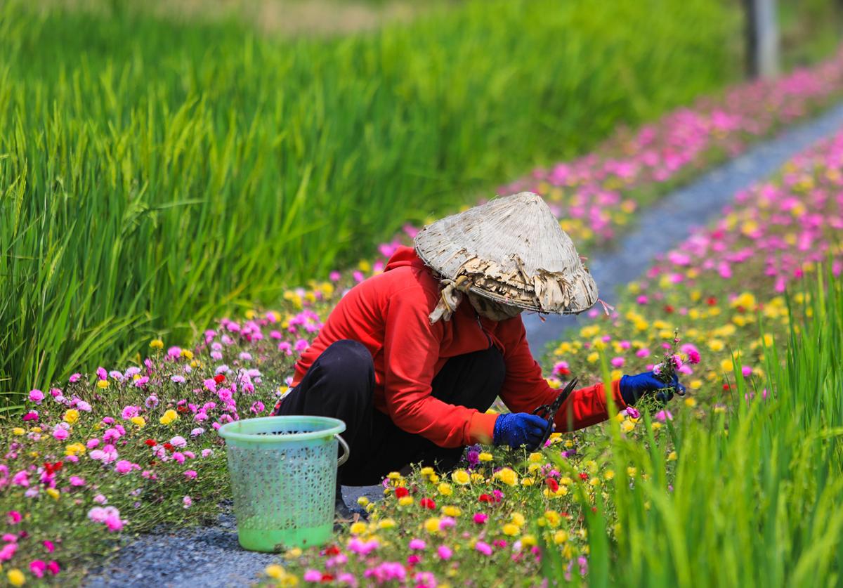 Con đường hoa mười giờ cách Sài Gòn 20 km - 6