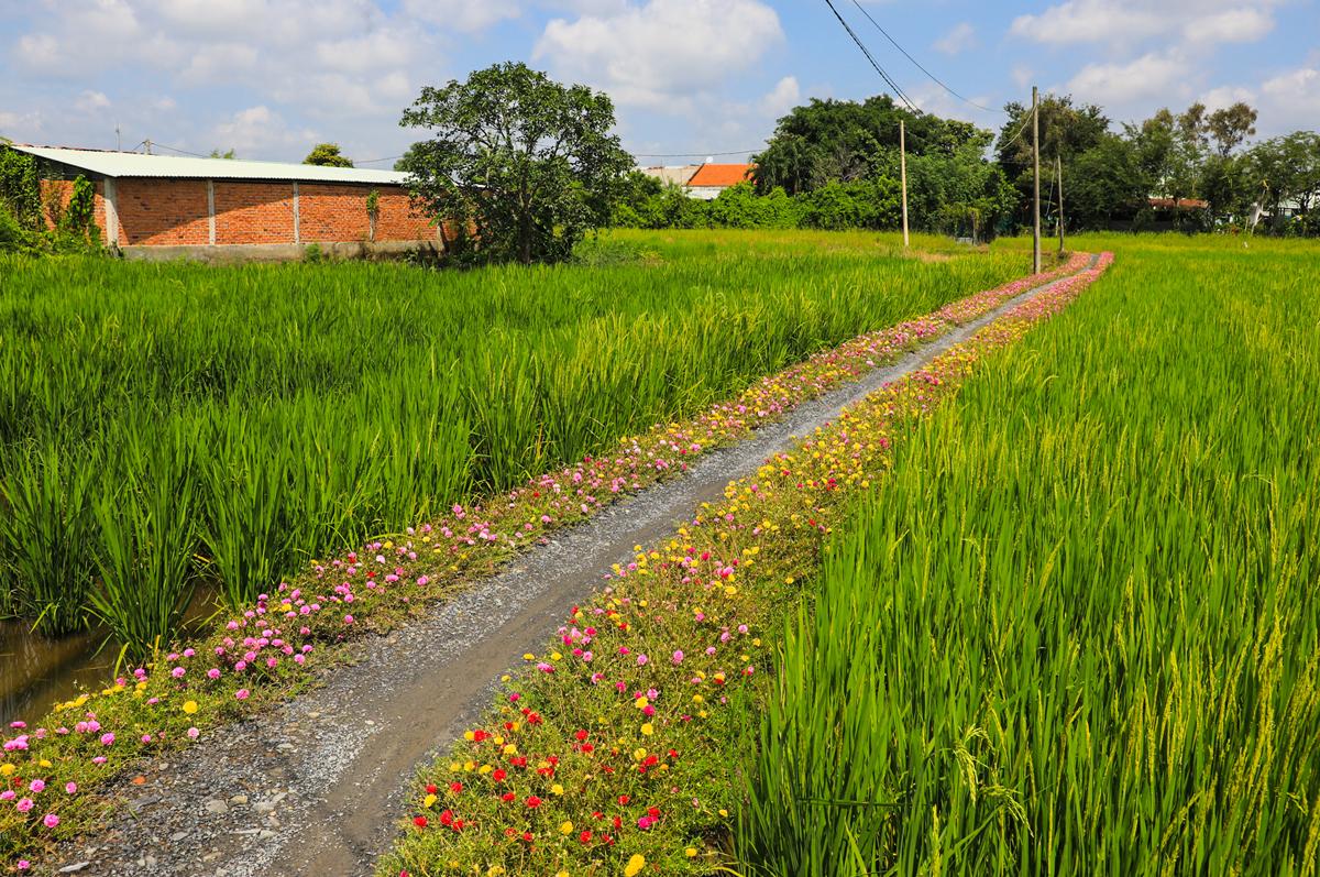 Con đường hoa mười giờ cách Sài Gòn 20 km - 8