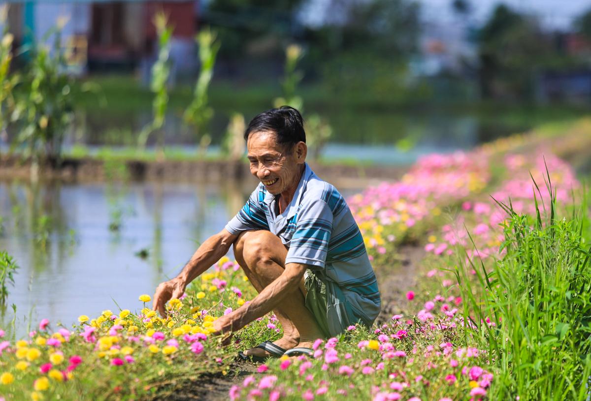 Con đường hoa mười giờ cách Sài Gòn 20 km - 4