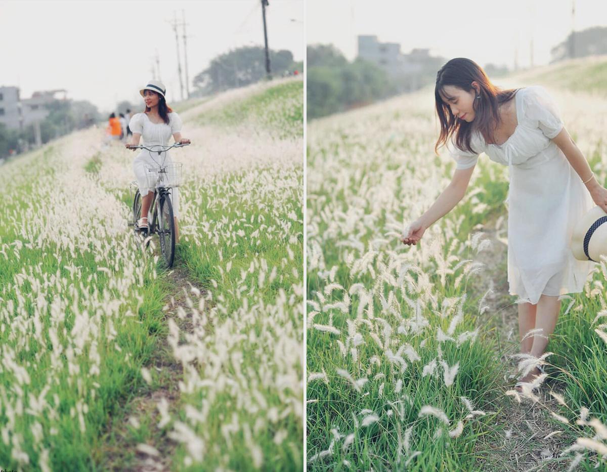 Thảm cỏ lau trắng có sức hút khó cưỡng với những yêu thiên nhiên mỗi lần qua đây. Ảnh: Thị Phương Phương