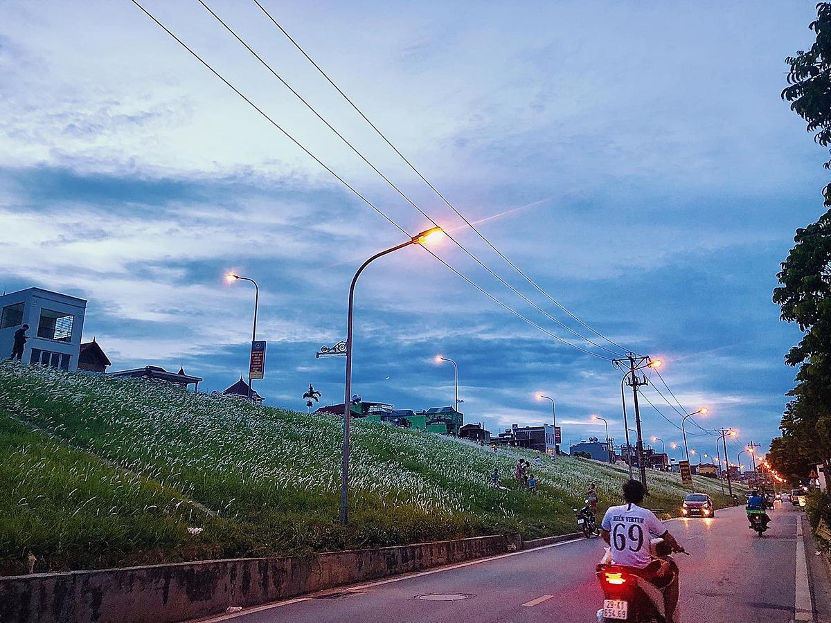 Triền đê Ngọc Thụy, quận Long Biên những tháng cuối hè đầu thu cũng được phủ một màu xanh và trắng của cỏ lau mới nở. Con đường nằm dọc khu dân cư nên hấp dẫn từ trẻ nhỏ, người lớn tới ngắm cảnh và chụp hình. Ảnh: Huyen Trang Dang