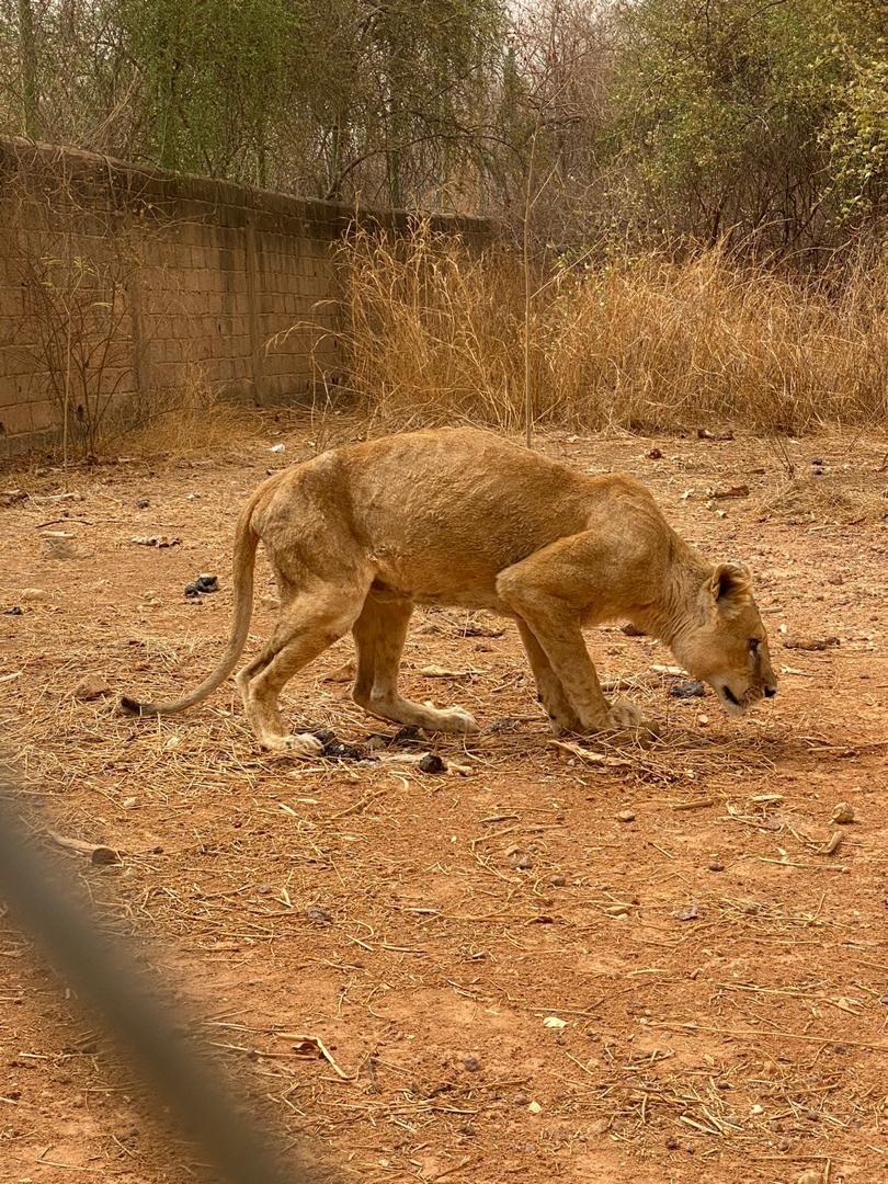 Nhiều người khi nhìn thấy các hình ảnh đáng thương này đã lên án chủ vườn thú, và gọi đây là vườn thú tồi tệ nhất thế giới. Ảnh: Jam Press