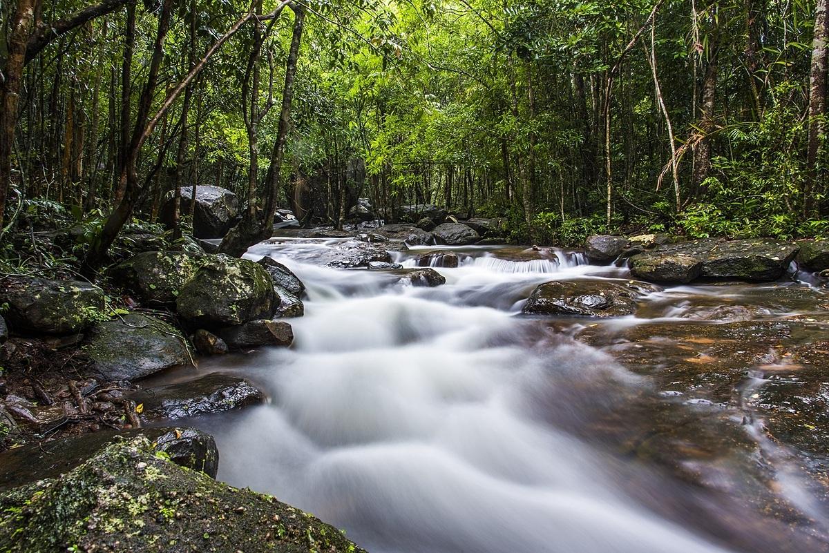 Ngày thứ hai, Hoàng Nam dành một ngày đi bộ xuyên cánh rừng nguyên sinh phía đông bắc đảo ngọc. Với diện tích hơn 31.400 ha, Vườn quốc gia Phú Quốc hội tụ đa dạng hệ sinh thái như núi, rừng, biển, thác, suối. Đây cũng là nơi sinh sống của hàng trăm loài động, thực vật, trong đó có nhiều loài phong lan, thảo dược quý hiếm và 5 loài thú trong sách đỏ Việt Nam.Lần đầu tiên tới Vườn quốc gia Phú Quốc, mình thấy bị hấp dẫn bởi thảm thực vật cũng như hệ thống suối và núi ở đây. Mình nghĩ trong tương lai hoạt động dã ngoại ở đây cũng sẽ rất thu hút, anh cho hay. Ảnh: Loc Huynh