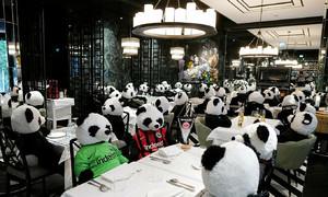 Nhà hàng chỉ đón 'gấu trúc' giữa Covid-19