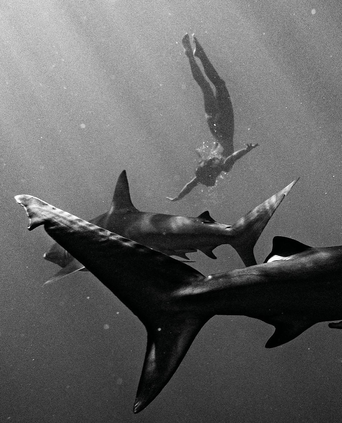 Trước khi thực hiện dự án này, Papen đã thiền định và chuẩn bị tinh thần để cảm nhận năng lượng của những con cá mập. Ảnh: Benjamin Ono, Earth Family/Real Press