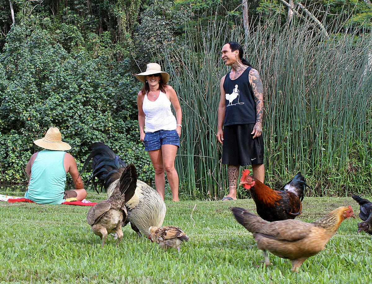 Du khách cũng thoải mái khi thấy những con gà hoang rong chơi. Ảnh: NY Times