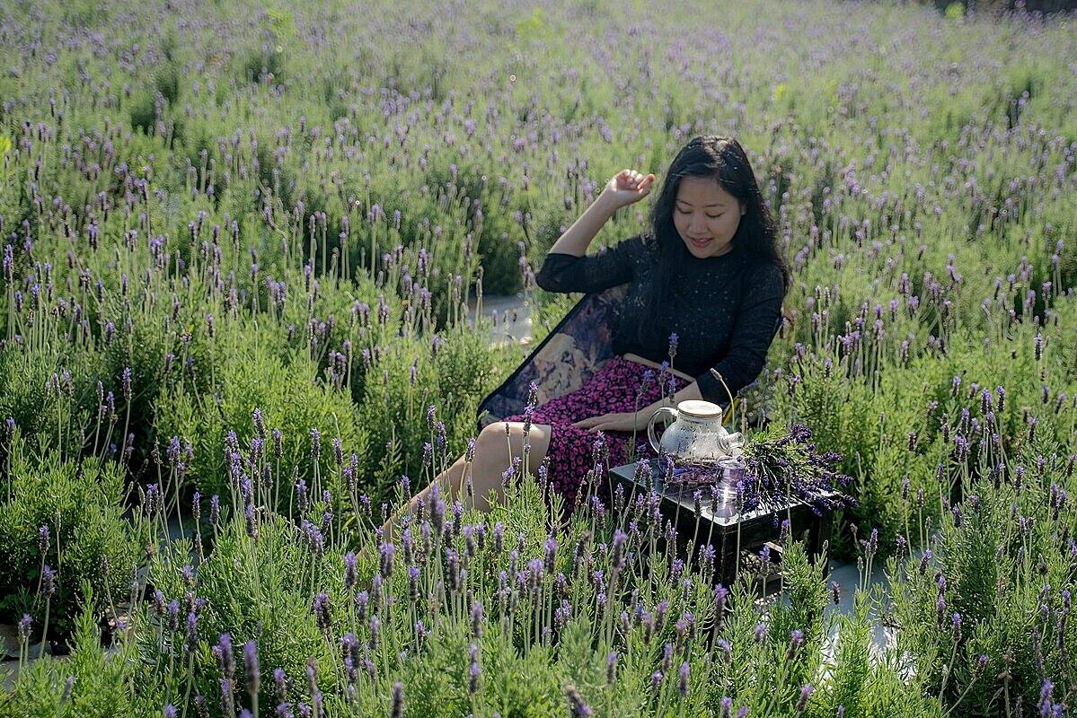 Vườn oải hương làng hoa Vạn Thành là điểm check-in mới cho du khách. Ảnh: Nguyễn Văn Sáng