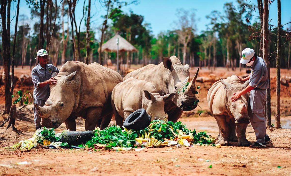 Ở safari có một quy tắc, tất cả động vật ở đây đều được gọi là bạn. Trên ảnh là tiệc sinh nhật của tê giác Hakuna Matata và Cà Phê. Ảnh: Vinpearl Safari Phú Quốc.