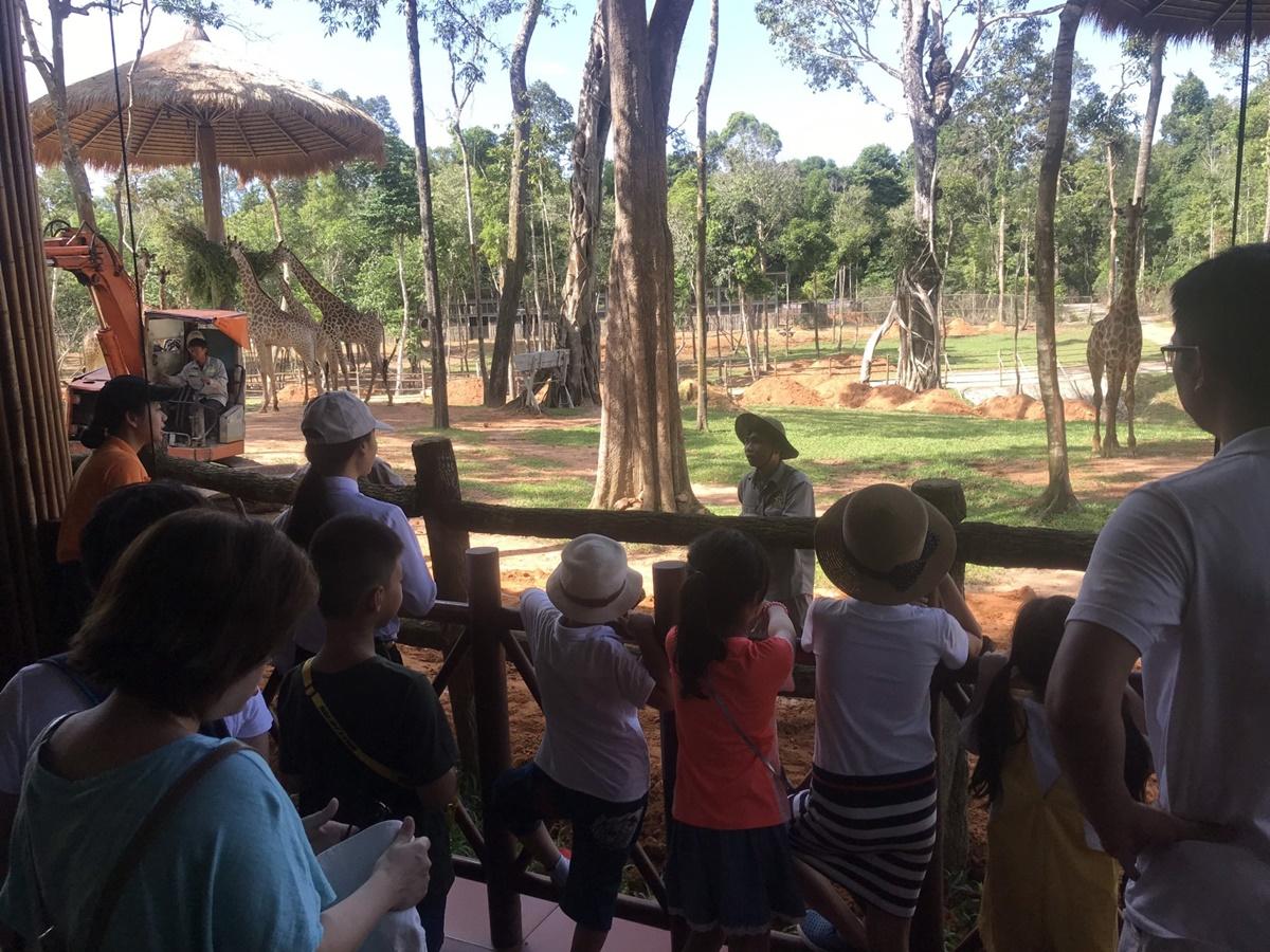 Có những lần được nghe các bạn nhỏ hỏi rằng, lưỡi hươu cao cổ có phải màu xanh cũng khiến anh Huy vui cả ngày. Vì anh biết, các bạn nhỏ đang ngày càng quan tâm và yêu thích động vật hoang dã. Ảnh: Vinpearl Safari Phú Quốc.