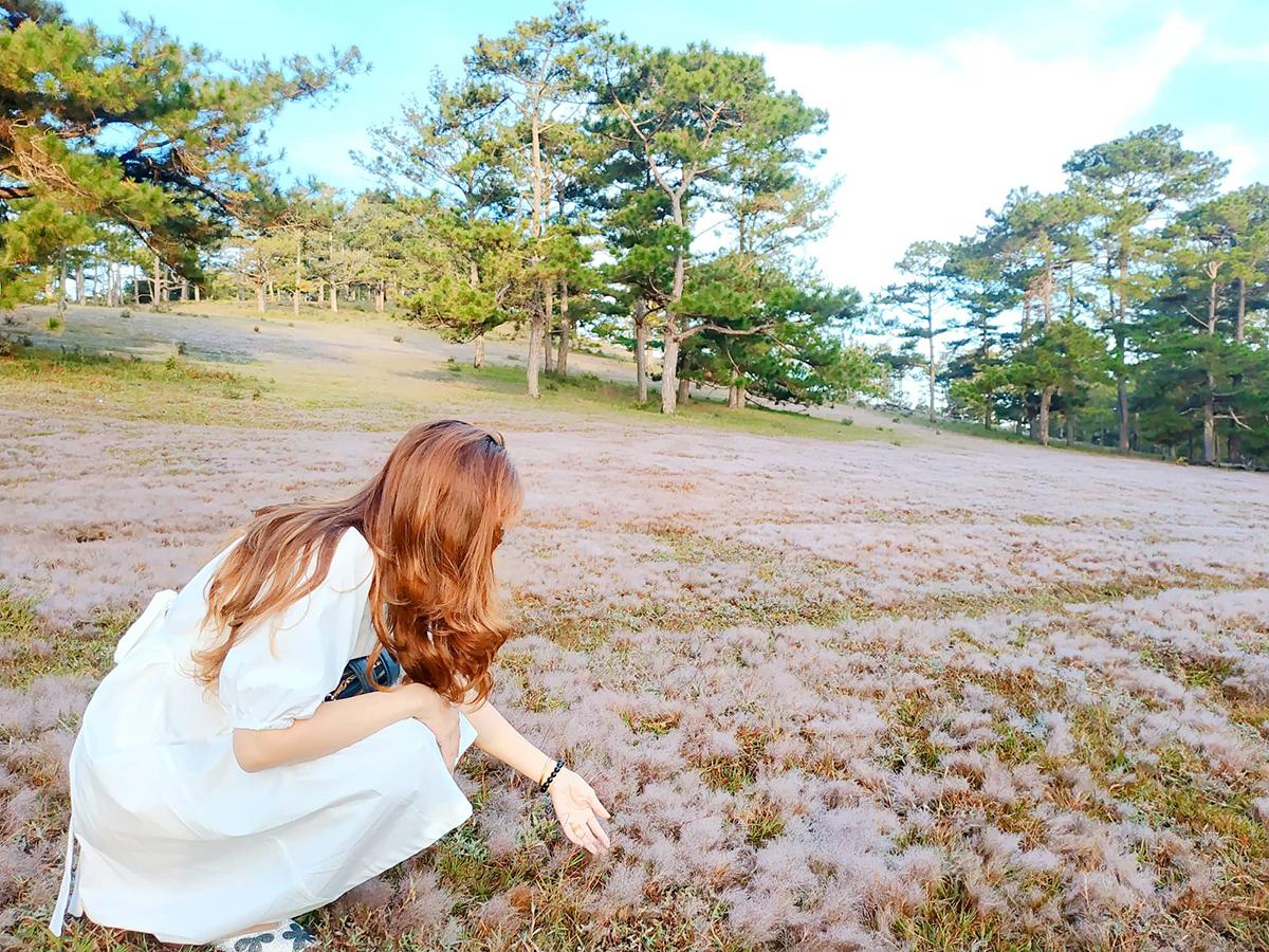 Cỏ hồng chỉ thật sự xuất hiện khi có đủ sương và nắng. Thời gian để cỏ hồng xuất hiện rơi vào khoảng 5h - 7h. Nắng càng to, màu hồng của cỏ sẽ càng đậm. Thời điểm chụp ảnh đẹp nhất là khi có đủ nắng. Ảnh: Ngô Anh Tuấn