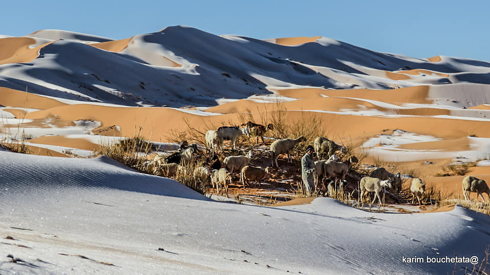 Người dân địa phương vẫn chăn gia súc dưới tiết trời lạnh giá.