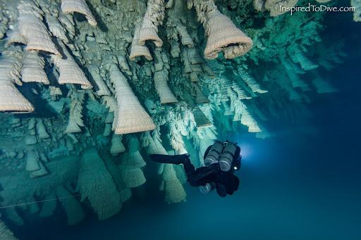 Chuông Địa Ngục tập trung ở khoảng giữa hố sụt, tính từ mặt nước đến đáy. Ảnh: Inspired To Dive