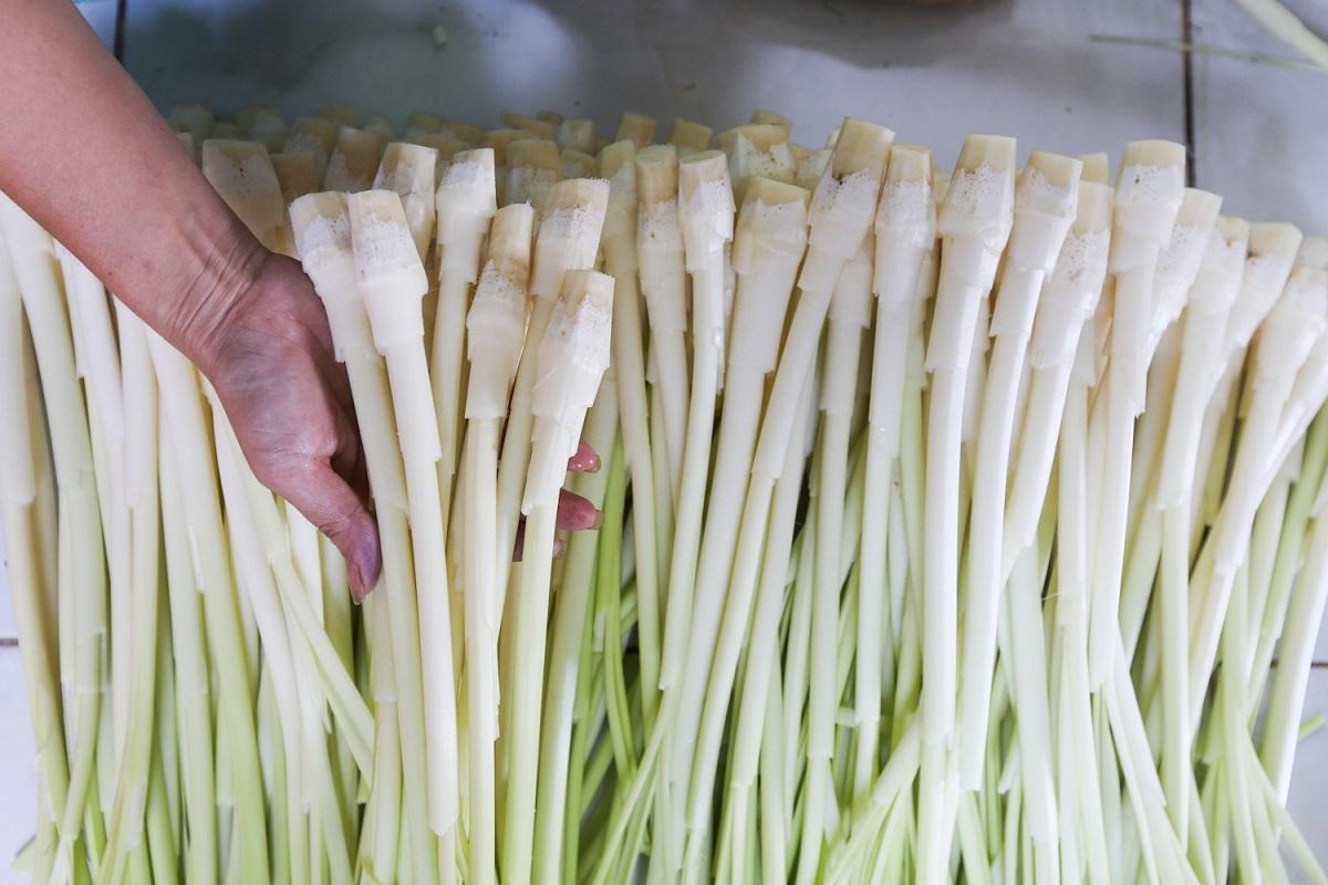 Bồn bồn vốn là loại cây hoang dã ưa đất phèn, người Cà Mau tách lá, lấy lõi non của cây để chế biến món ăn như xào tép, xào thịt, nấu lẩu và canh chua. Vào ngày Tết, ngoài các món dưa rau muống, dưa cà, dưa cải... ăn kèm thịt kho tàu thì món dưa bồn bồn cũng là một gợi ý mới cho những vị khách có dịp du xuân Cà Mau. Người dân huyện Cái Nước, đặc biệt ở các xã Tân Hưng Đông và Hòa Mỹ thường chế biến sẵn bồn bồn làm dưa, cho vào các hộp đựng rất đẹp mắt.