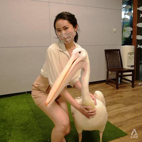 Bồ nông Luke. Ảnh: Joyee Koo/CNA