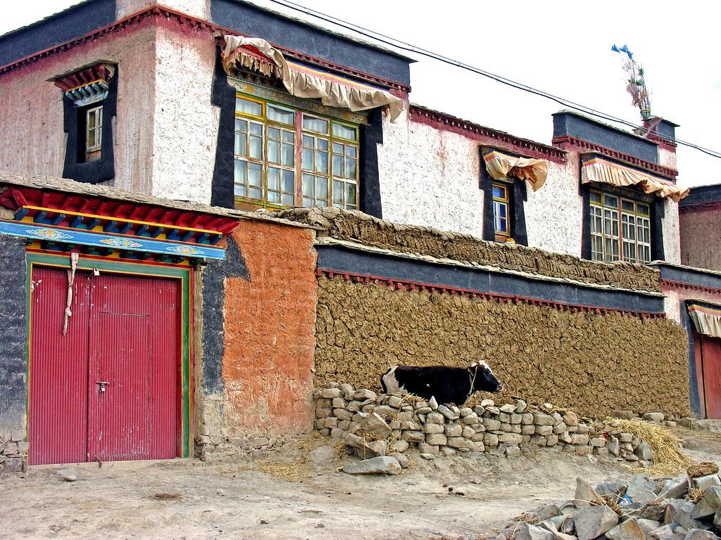 Những bức tường phủ kín phân bò khô, thứ người Tây Tạng dùng làm chất đốt trong những tháng mùa đông. Ảnh: Dennis Jarvis/Flickr