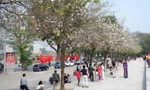 Hàng trăm người chụp ảnh bên hoa ban