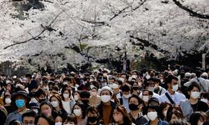 Mùa hoa anh đào sớm nhất 1.200 năm qua ở Nhật Bản