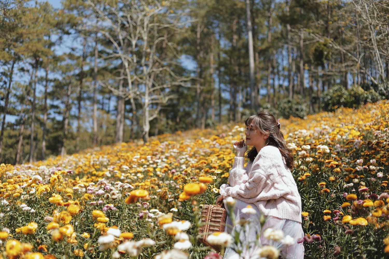 Cùng khí hậu ôn hòa, mát mẻ, Đà Lạt có muôn sắc hoa nở quanh năm. Ảnh: Bích Ngọc.
