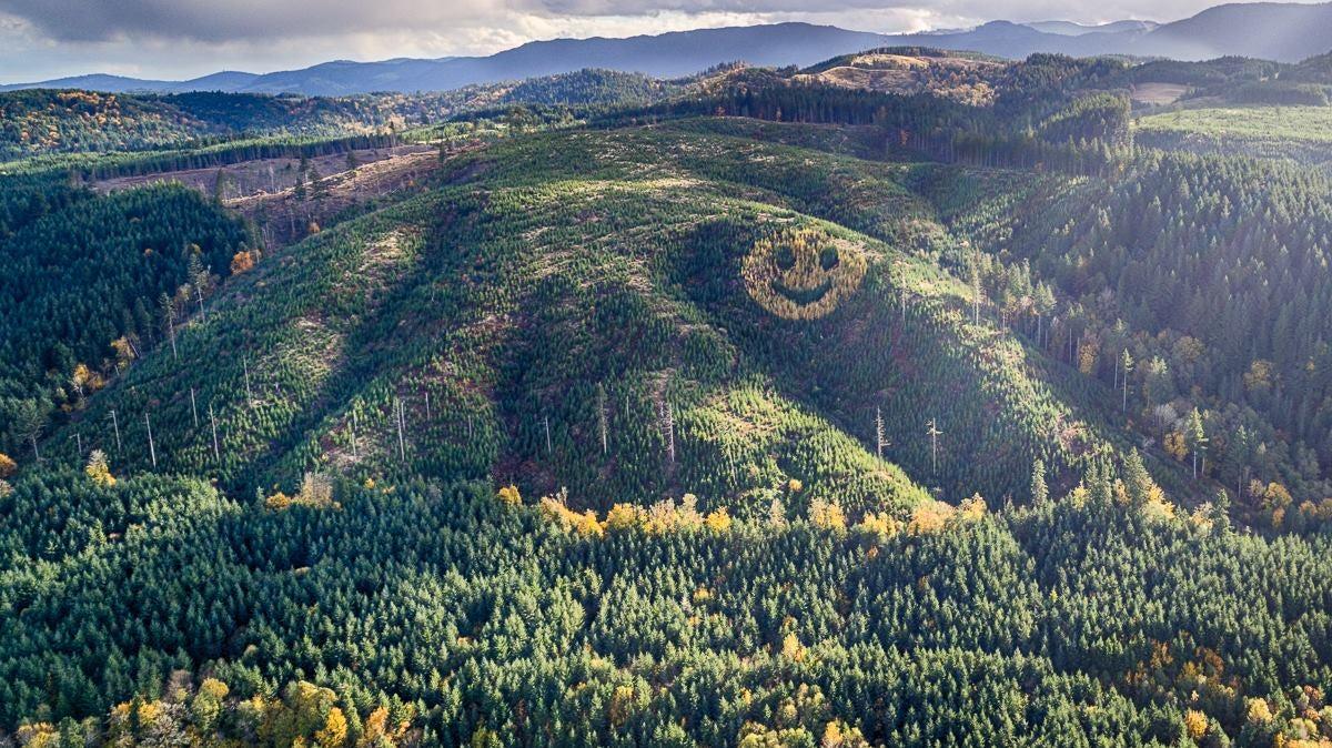Mặt cười bừng sáng trên sườn đồi khiến không ít lái xe cảm thấy vui vẻ khi nhìn thấy. Ảnh: Skogs Forum