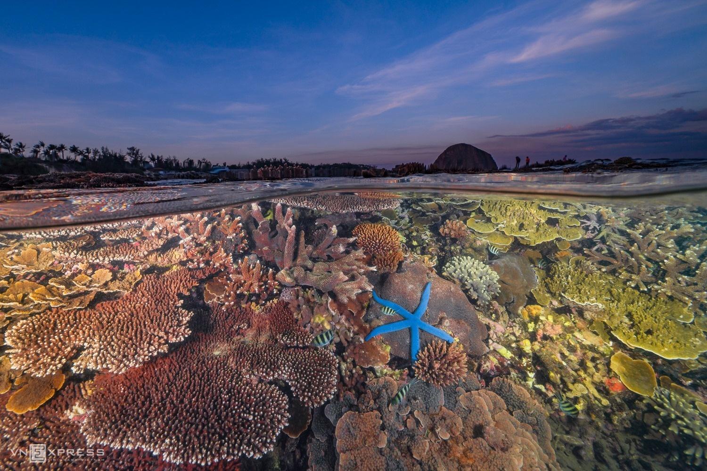 Rạn san hô cạn ở Hòn Yến Ảnh: Nguyễn Ngọc Thiện