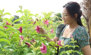 Khu vườn hơn 50.000 cây trái toàn màu tím giữa Sài Gòn