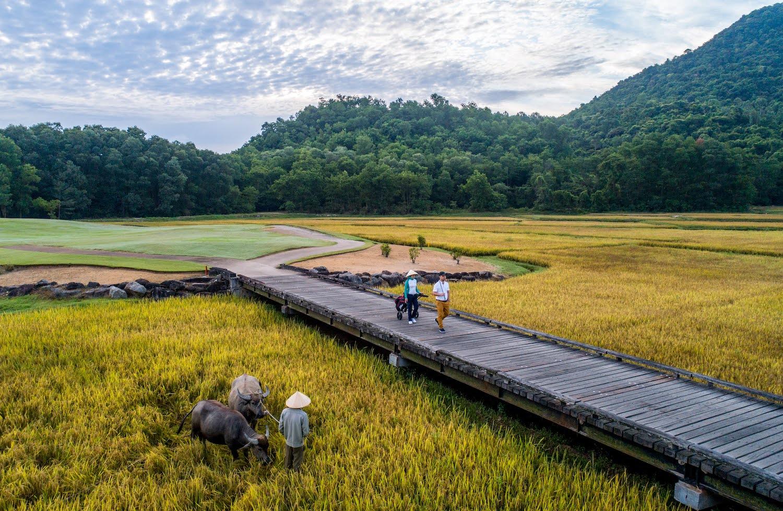 Đường dẫn ra sân golf với cánh đồng lúa bao quanh giúp tạo cảnh quan gần gũi thiên nhiên, vừa giúp đem lại công việc và thu nhập cho cộng đồng địa phương. Ảnh: LLC.