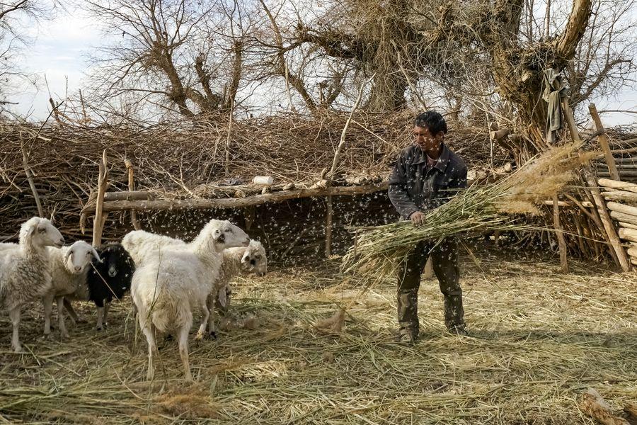 Họ sống chủ yếu dựa vào trồng trọt; chăn nuôi cừu, dê...