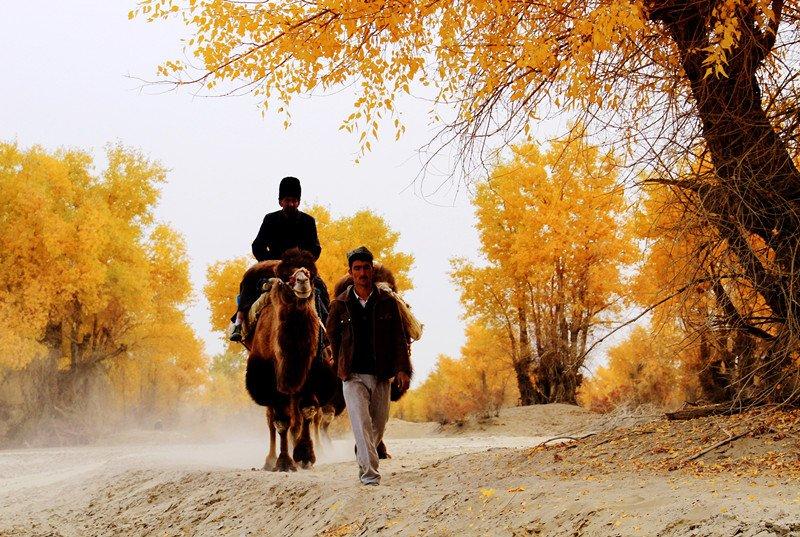 Bên cạnh xe máy hay ôtô hiện đại, người dân vẫn di chuyển bằng lạc đà. Ảnh: QQ