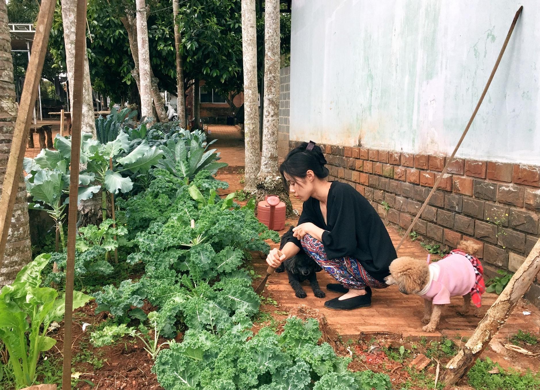 Ngôi nhà và vườn rau xanh của gia đình tại Đắk Lắk. Ảnh: NVCC.