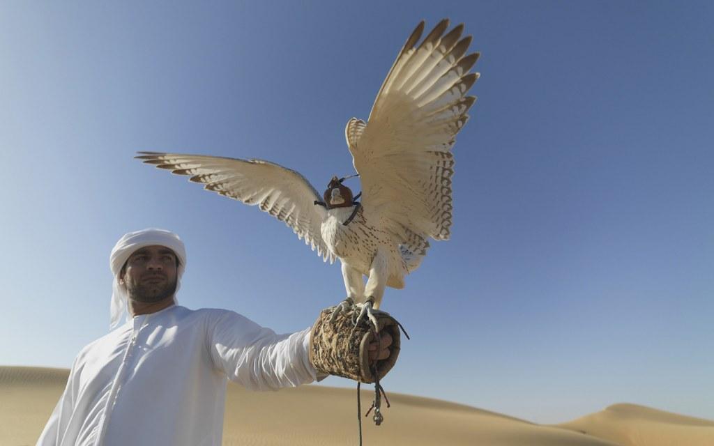 Chim ưng là biểu tượng quốc gia, và trước đây giới nhà giàu ở đây thường nuôi loài vật này. Ngày nay, du khách đến Dubai sẽ thường thấy loài chim này xuất hiện ở một số điểm du lịch. Trong khi đó, linh dương Arab được coi là quốc thú. Ảnh: Bayut
