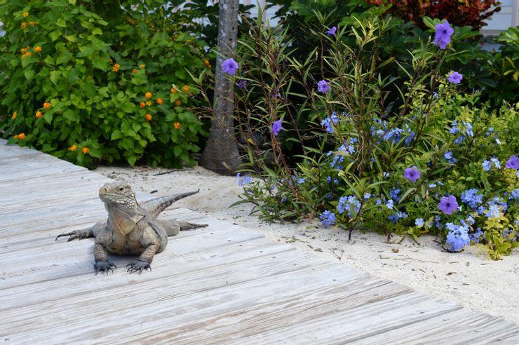 Khí hậu mùa hè tại Carribean vô cùng ẩm ướt khiến du khách có thể cảm thấy khó chịu. Đó là một trong những lý do khiến Carribean hút khách hơn vào mùa xuân, thu và đông, khi khí hậu ôn hoà hơn. Những tháng mùa hè cũng ghi nhận lượng mưa nhiều hơn, gây cản trở cho du khách muốn tắm biển. Ảnh: Shutterstock