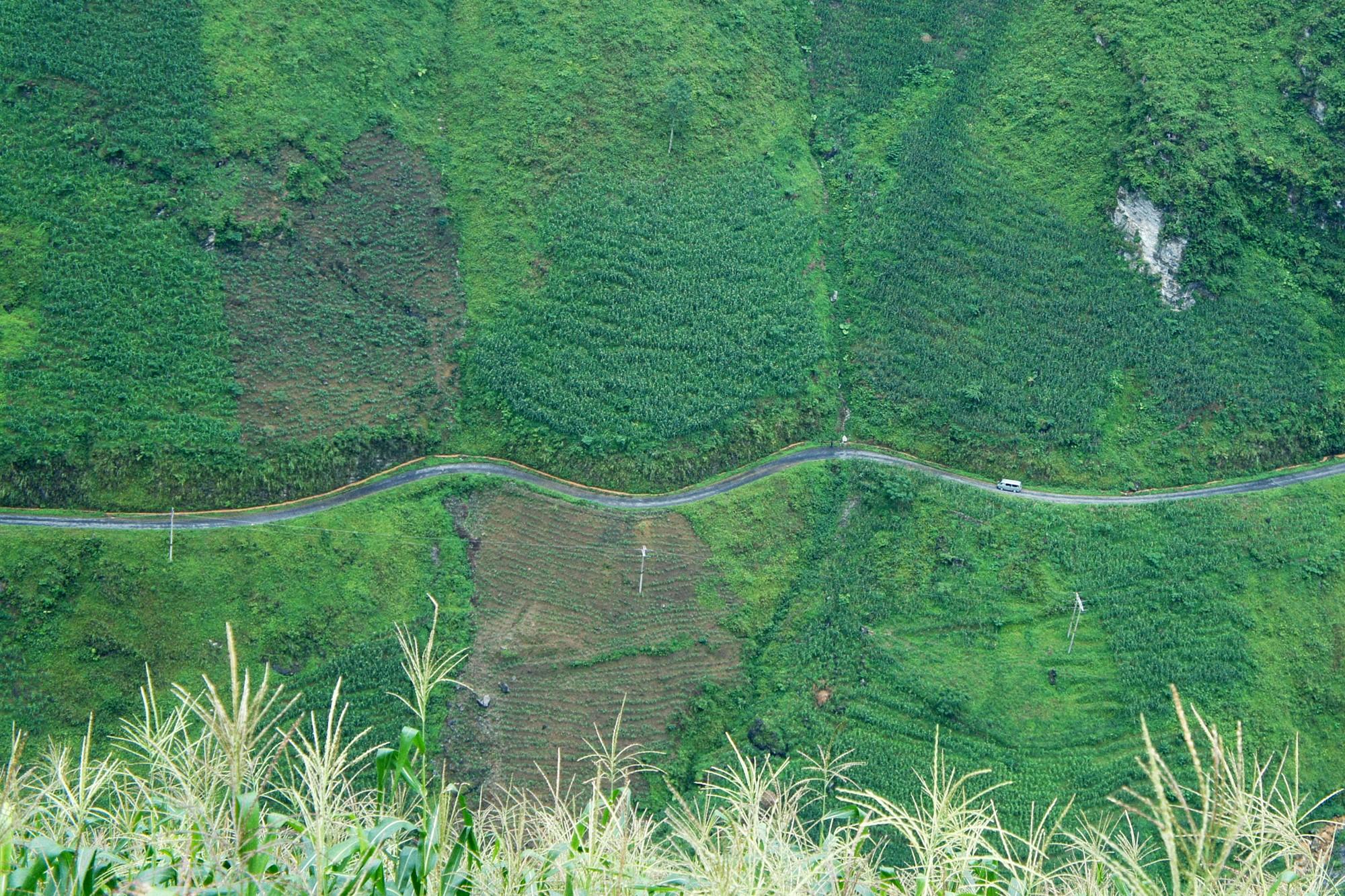 Mùa ngô xanh mướt trên cao nguyên đá Đồng Văn - 5