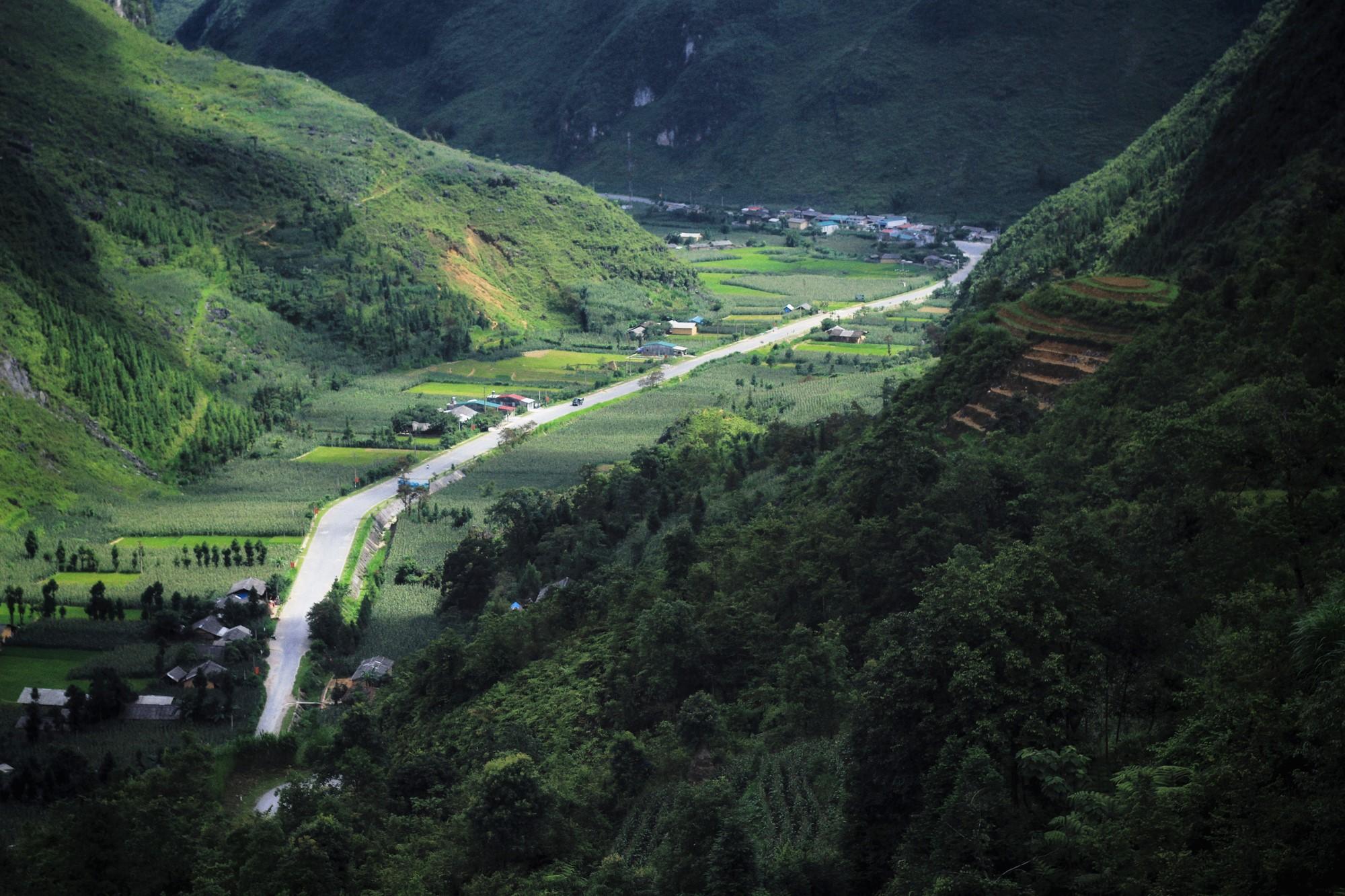 Mùa ngô xanh mướt trên cao nguyên đá Đồng Văn - 4