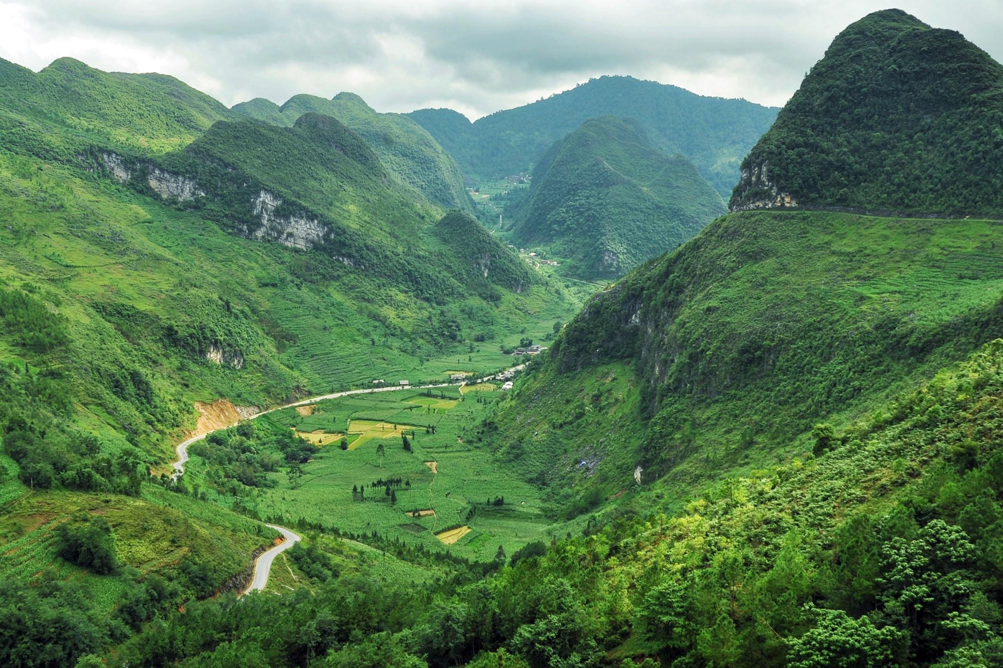 Mùa ngô xanh mướt trên cao nguyên đá Đồng Văn - 1