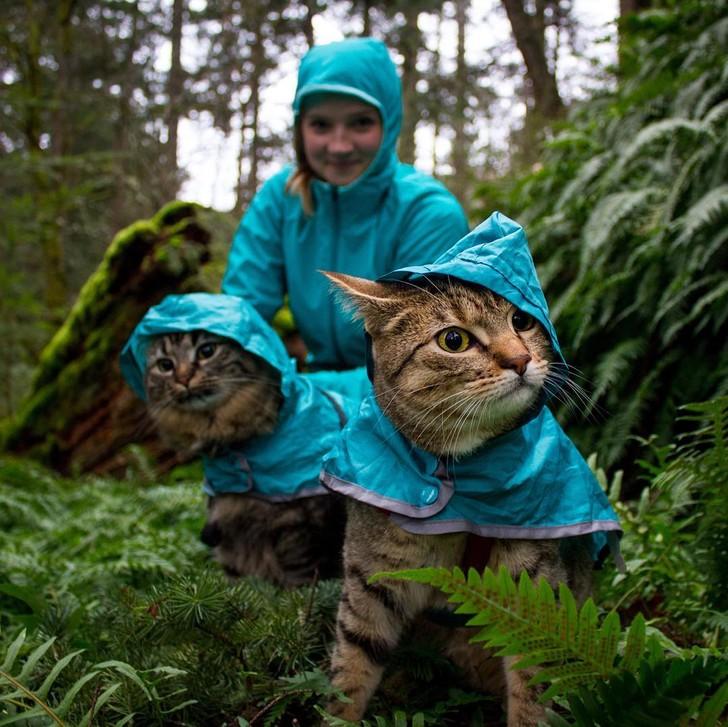 Những con mèo du lịch khắp thế giới - 3