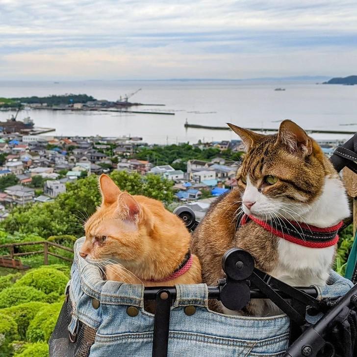Sự nổi tiếng của bộ ba đến vào năm 2017, khi những con mèo có blog riêng và các phương tiện truyền thông bắt đầu viết về chúng. Hiện tại, chúng đã ít đi du lịch cùng chủ hơn, nhưng những bức ảnh với bối cảnh hoa anh đào nở rộ và những khung cảnh đẹp như tranh vẫn tiếp tục thu hút hơn 20.000 người đăng ký. Ảnh: @the.traveling.cats/Instagram