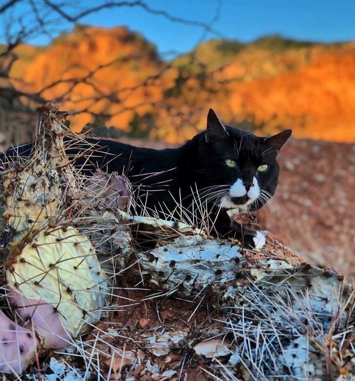 Trên đường đi, Simmons chụp ảnh con mèo và đăng Instagram, từ đó Miến Điện bắt đầu nổi tiếng. Trong suốt cuộc đời mình, Miến Điện đã ghé qua hơn 30 tiểu bang tại Mỹ. Hiện tại, con mèo đã ở tuổi già nên những bức ảnh về những chuyến đi của nó ngày càng ít xuất hiện trên mạng xã hội. Ảnh: @burmaadventurecat/Instagram